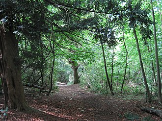 Moat Mount Open Space - Image: Moat Mount Nut Wood