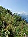 Monte Sant'Elia di Palmi03.jpg