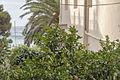 Monterosso S6.jpg