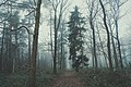 Moody Forest (Unsplash).jpg