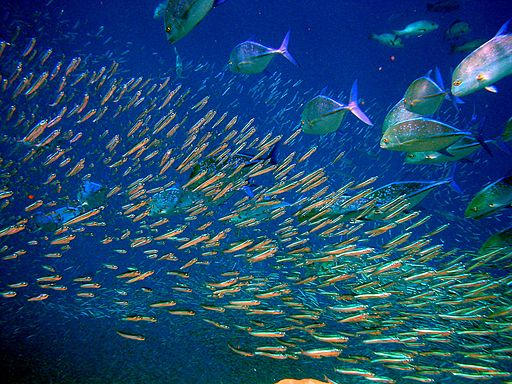 Moofushi Kandu fish