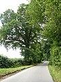 Moorhurst Lane, Holmwood, Surrey - geograph.org.uk - 1404163.jpg