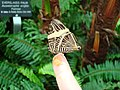 Mosaic butterfly at the Niagara Parks Butterfly Conservatory, 2010 B.jpg