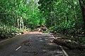 Moscow, Losiny Ostrov park, fallen tree on Yauzskaya Alley (31409981621).jpg