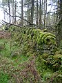 Mossy wall on Knockour Hill - geograph.org.uk - 1063352.jpg