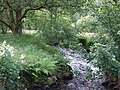 Mountain Stream, Carmarthenshire - geograph.org.uk - 509605.jpg
