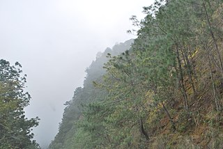 Sierra Madre Oriental pine–oak forests
