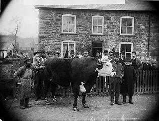 Mr Lewis' bull