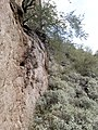 Mt. Pinter Base Loop, Tonto National Forest, Butcher Jones Trail, Fort McDowell, AZ 85264, USA - panoramio (71).jpg