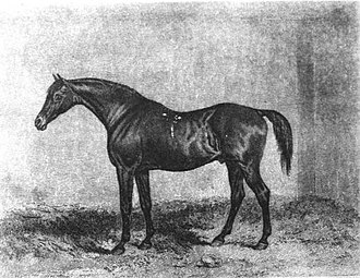 Eleanor (horse) - Muley: Eleanor's bay 1810 colt sired by Orville and her most notable son. Muley became a successful sire of racehorses and broodmares in the 1820s and 1830s.