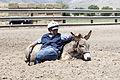 My Public Lands Roadtrip- Northern Nevada Correctional Center-Stewart Conservation Camp Saddle Horse and Burro Training Program in Carson City, Nevada (18916703534).jpg
