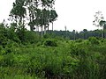 Nīcgale Parish, LV-5463, Latvia - panoramio - alinco fan (1).jpg