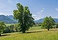 NDOÖ 143 Gsanglinde Viechtwang Scharnstein 05 2015.jpg
