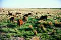 NRCSNM00001 - New Mexico (5191)(NRCS Photo Gallery).tif