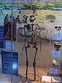 Nairobi National Museum 03.JPG