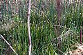 National nature reserve Soos in spring 2015 (16).JPG
