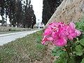 Nature for blinds 18.jpg