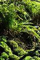 Naturschutzgebiet Neuer Hagen - Urwald (3).jpg
