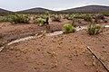 Near the Brockman Hills - Flickr - aspidoscelis (4).jpg