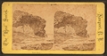 Negro Head, from Robert N. Dennis collection of stereoscopic views.png
