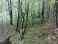 Nevyanskiy r-n, Sverdlovskaya oblast', Russia - panoramio (159).jpg