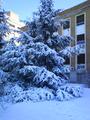 Nieve en la Facultad de Medicina de la UCM.PNG