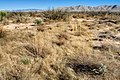 Northeast of Willcox Playa - Flickr - aspidoscelis.jpg