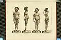 Nova Guinea - Vol 3 - Plate 40.jpg