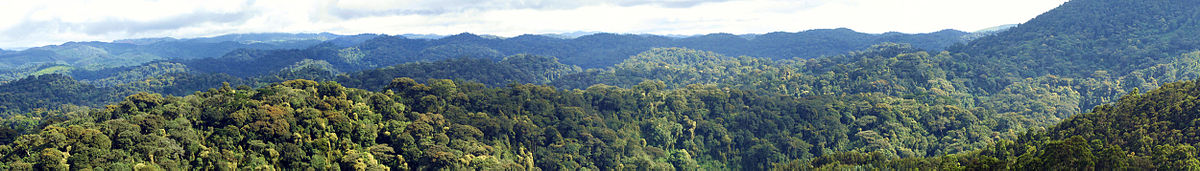 Nyungwe Forest National Park - Rwanda