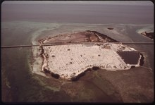 "OHIO, OR ""SUNSHINE"" KEY ONE OF THE LOWER FLORIDA KEYS, WHERE RACHEL CARSON CAMPED WHILE GATHERING DATA FOR HER BOOK... - NARA - 548632.tif"