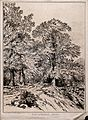 Oak trees (Quercus robur L.) by a country lane in Berkshire. Wellcome V0043124.jpg