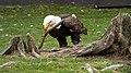 Oaklawn Farm Zoo, May 16 2009 (3539709996).jpg