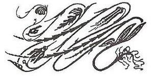 Hermann Obrist - A simplified version of Cyclamen