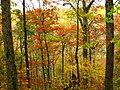 October Ozark Woodlands.jpg