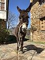 Ok donkey.jpg