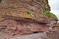 Old Red Sandstone at Auchmithie in Scotland.jpg