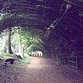 Onda de bambus - Parque Cemucam.JPG