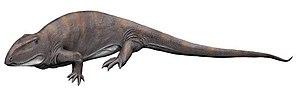 Ophiacodon - Ophiacodon mirus