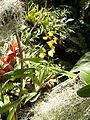 Orchidaceae.2637.JPG