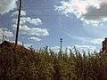 Overgrown with nettles - panoramio.jpg