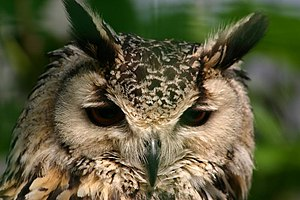 Owl In Deep Thoughts.jpg