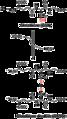 Oxidation of Glutathione to Glutathione disulfide.png