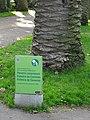 Palmeres - arbre d'interès local - Jardins de Vil·la Amèlia P1280091.jpg