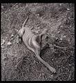 Paolo Monti - Serie fotografica - BEIC 6341288.jpg