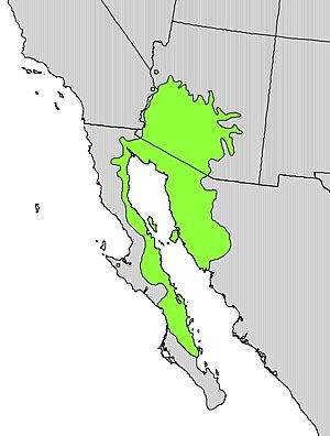Parkinsonia microphylla - Image: Parkinsonia microphylla range map