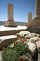 Pasargadae, Iran (2470095533).jpg