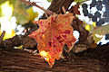 Paseo del Vino Winery (16960200946).jpg