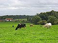 Pasture above Medmenham - geograph.org.uk - 963335.jpg