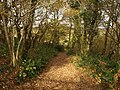 Path to Hembury Barn - geograph.org.uk - 1053233.jpg