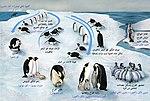 Penguin-lifecycle-ar.jpg